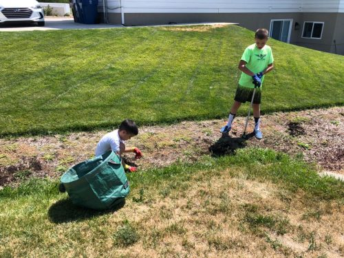 NIZOK PRO™ WEED REMOVER photo review